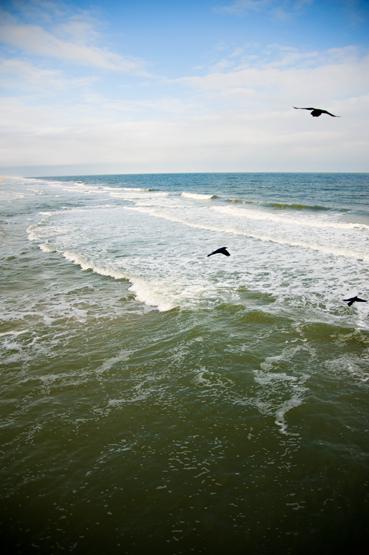 shore1a